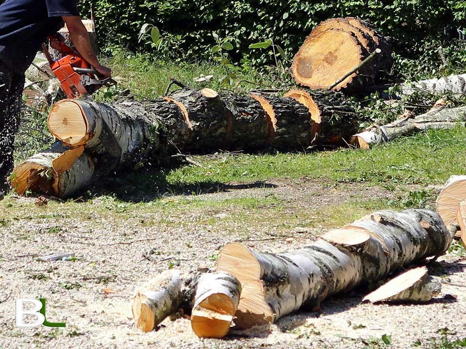 abattage-arbre-13-aix-les-milles