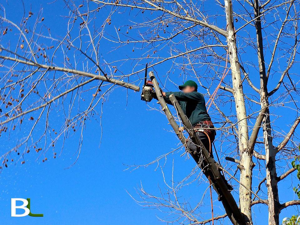 decoupe-arbre-aix-en-provence