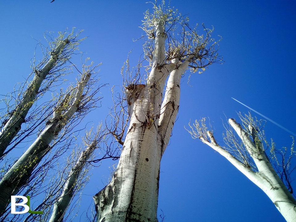 taille-arbre-aix