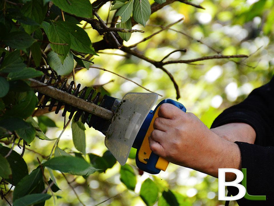 taille-haies-jardinage-elagage-13